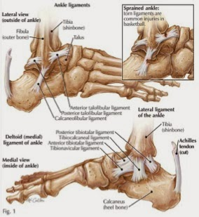 Ankle Sprains | OSR Physical Therapy